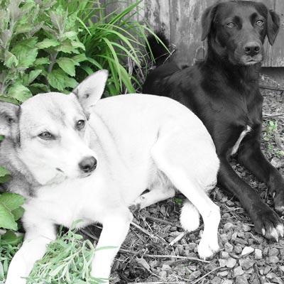 psi na zahradě